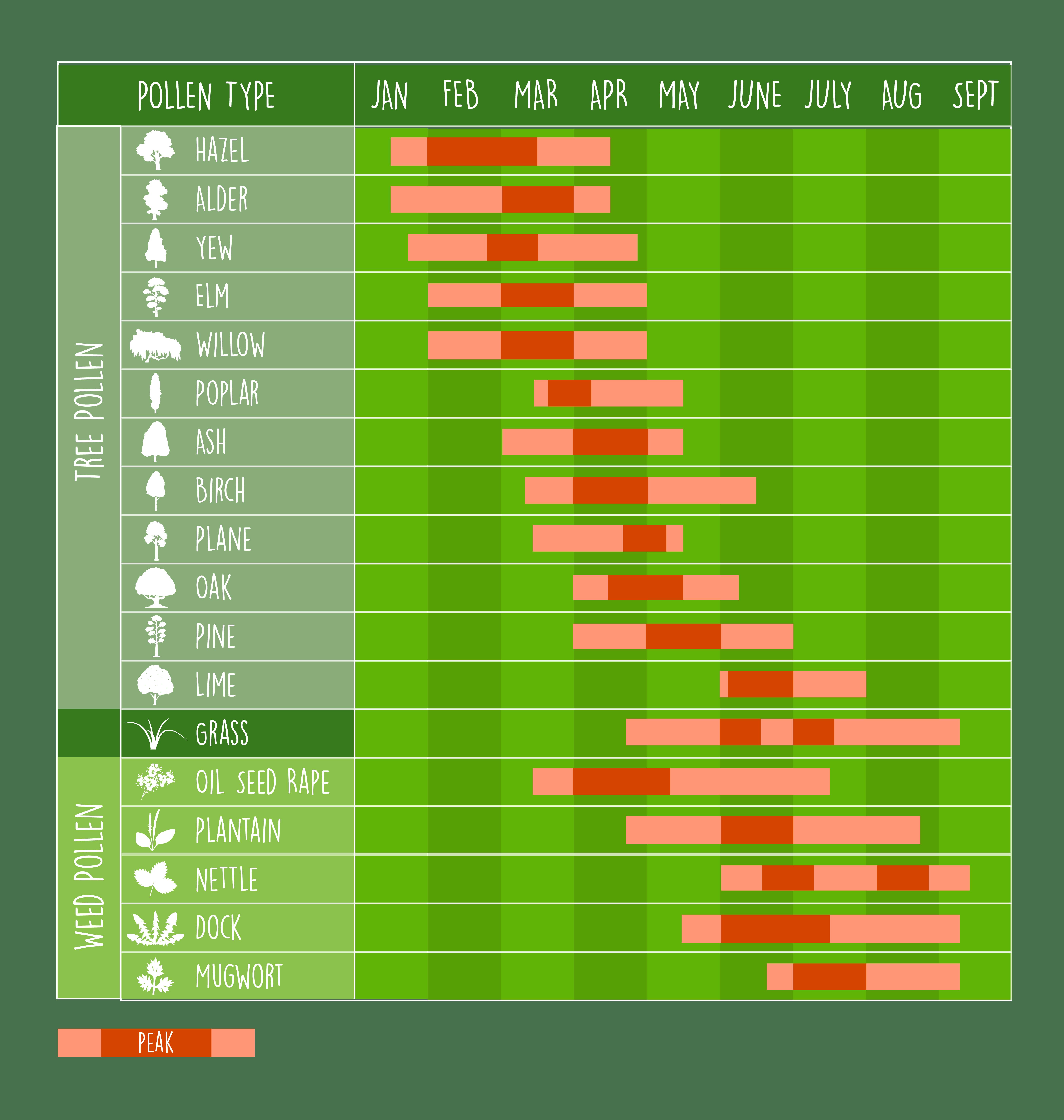 UK pollen calendar illustration, showing pollen seasons through the year